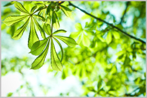 Pflanzenenergie